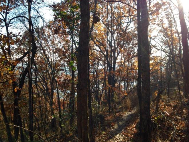 A view on the trails at Turkey Mountain in Tulsa.  Pretty great way to spend the morning.